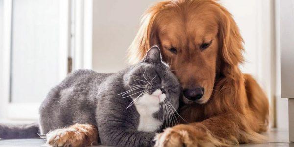 Mascotas y aceites esenciales… ¿Podemos usar aceites si tenemos animales en nuestro hogar?